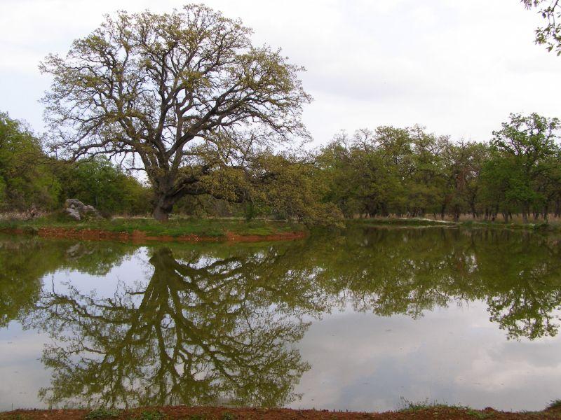 Αποτέλεσμα εικόνας για δάσος κουρι αλμυρού